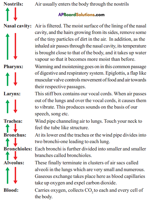AP SSC 10th Class Biology Important Questions Chapter 2 Respiration 8