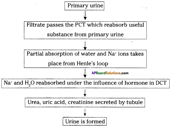 AP SSC 10th Class Biology Important Questions Chapter 4 Excretion 4