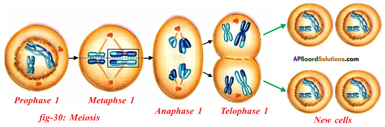 AP SSC 10th Class Biology Important Questions Chapter 6 Reproduction 25