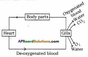 AP SSC 10th Class Biology Solutions Chapter 3 Transportation – The Circulatory System 6