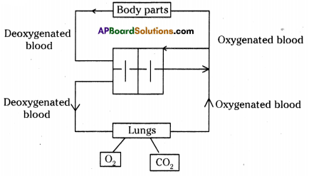 AP SSC 10th Class Biology Solutions Chapter 3 Transportation – The Circulatory System 7