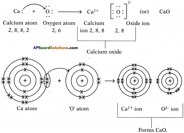 AP SSC 10th Class Chemistry Solutions Chapter 10 Chemical Bonding 7