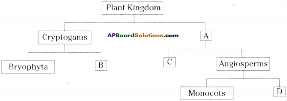 AP Board 9th Class Biology Important Questions Chapter 5 Diversity in Living Organism 16