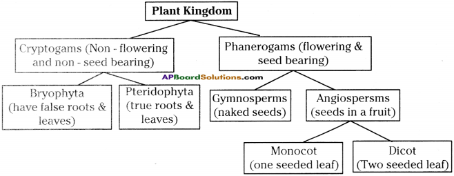 AP Board 9th Class Biology Important Questions Chapter 5 Diversity in Living Organism 19