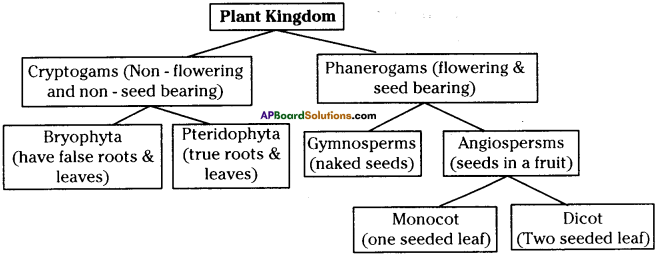 AP Board 9th Class Biology Important Questions Chapter 5 Diversity in Living Organism 2