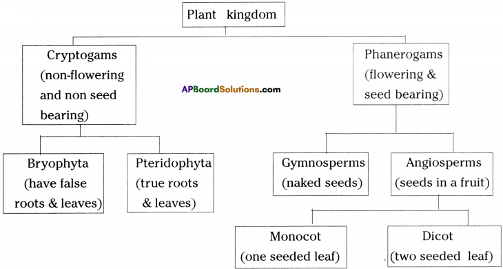 AP Board 9th Class Biology Important Questions Chapter 5 Diversity in Living Organism 8