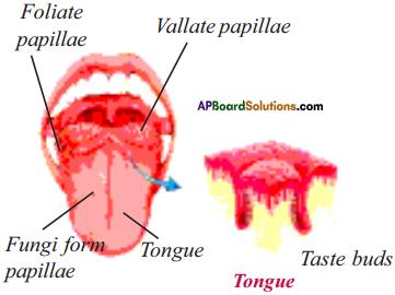 AP Board 9th Class Biology Solutions Chapter 6 Sense Organs 3