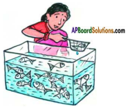 AP SSC 10th Class Maths Solutions Chapter 13 Probability Ex 13.2 1