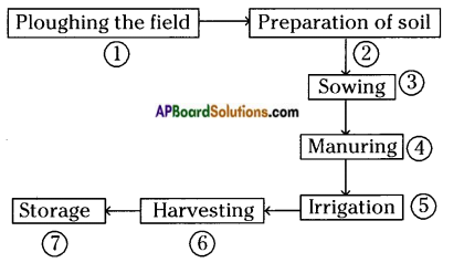 AP Board 8th Class Biology Important Chapter 8 Production and Management of Food From Plants 2