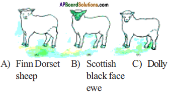 AP Board 8th Class Biology Solutions Chapter 4 Reproduction in Animals 2