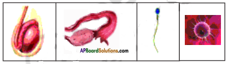 AP Board 8th Class Biology Solutions Chapter 4 Reproduction in Animals 3