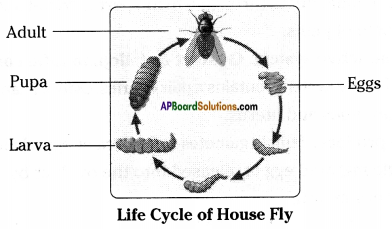 AP Board 8th Class Biology Solutions Chapter 4 Reproduction in Animals 9