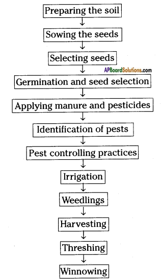 AP Board 8th Class Biology Solutions Chapter 8 Production and Management of Food From Plants 2