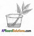 AP Board 6th Class Science Solutions Chapter 2 Knowing About Plants 9