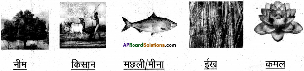 AP Board 6th Class Hindi Solutions Chapter 2 तितली 16