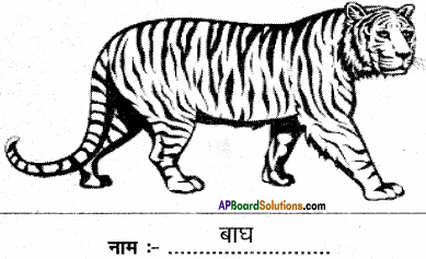 AP Board 6th Class Hindi Solutions Chapter 8 जन्म दिन 11