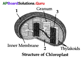 AP 10th Class Biology Bits Chapter 1 Nutrition 14