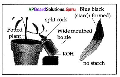 AP 10th Class Biology Bits Chapter 1 Nutrition 5