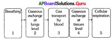 AP 10th Class Biology Bits Chapter 2 Respiration 1