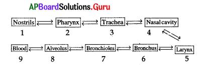 AP 10th Class Biology Bits Chapter 2 Respiration 3