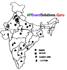 AP 9th Class Social Bits Chapter 6 Agriculture in India with Answers 5
