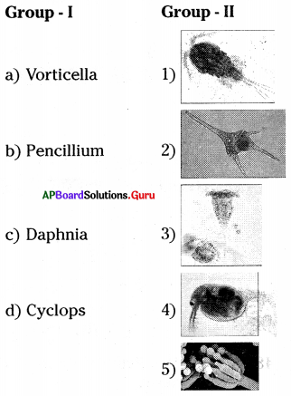 AP 8th Class Biology Bits Chapter 2 Cell The Basic Unit of Life with Answers 10