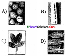 AP 8th Class Biology Bits Chapter 3 Story of Microorganisms 1 with Answers 7
