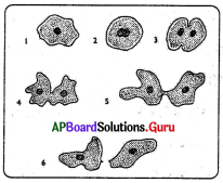 AP 8th Class Biology Bits Chapter 4 Reproduction in Animals with Answers 1
